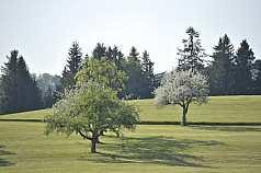 Wiese mit Bäumen
