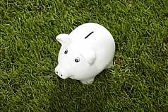 Sparschwein im Gras, schraeg