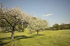blühende Bäume auf einer Wiese