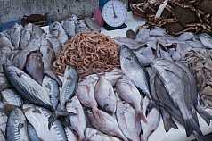 Fischverkauf in einem marokkanischen Hafen