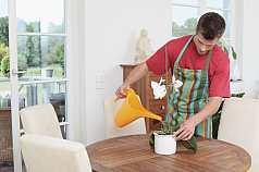Mann gießt Topfpflanze